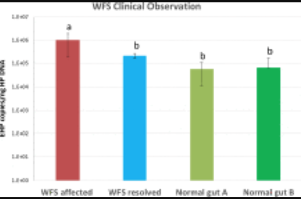 clinical-manifestations-of-white-feces-syndrome-wfs-and-its-association-with-enterocytozoon-hepatopenaei-in-penaeus-vannamei-grow-out-farms-a-pathobiological-investigation